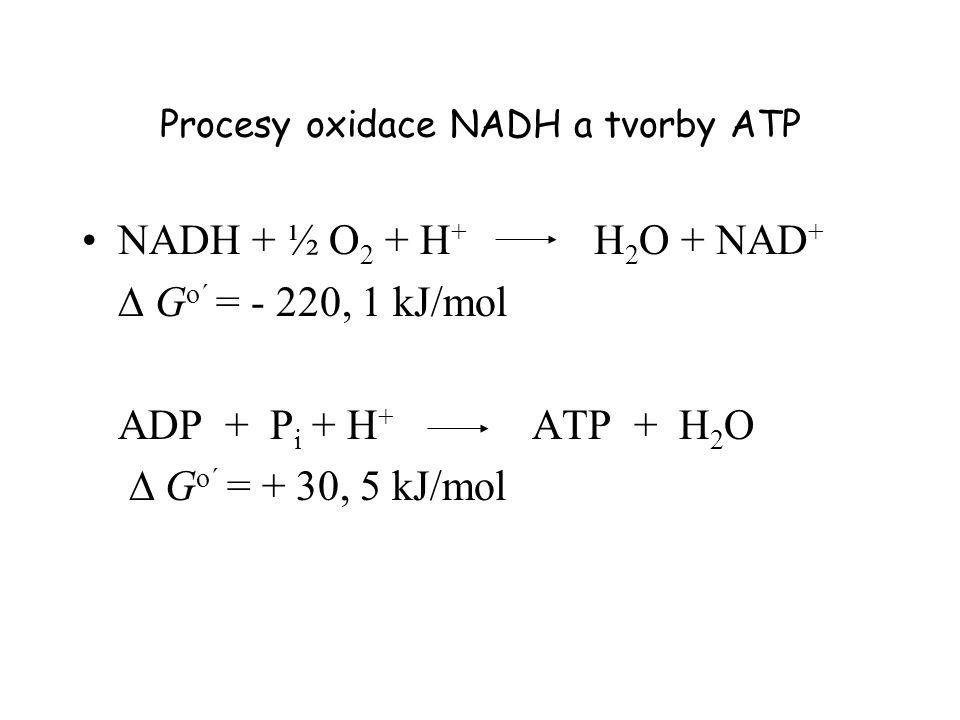 Procesy oxidace NADH a tvorby ATP