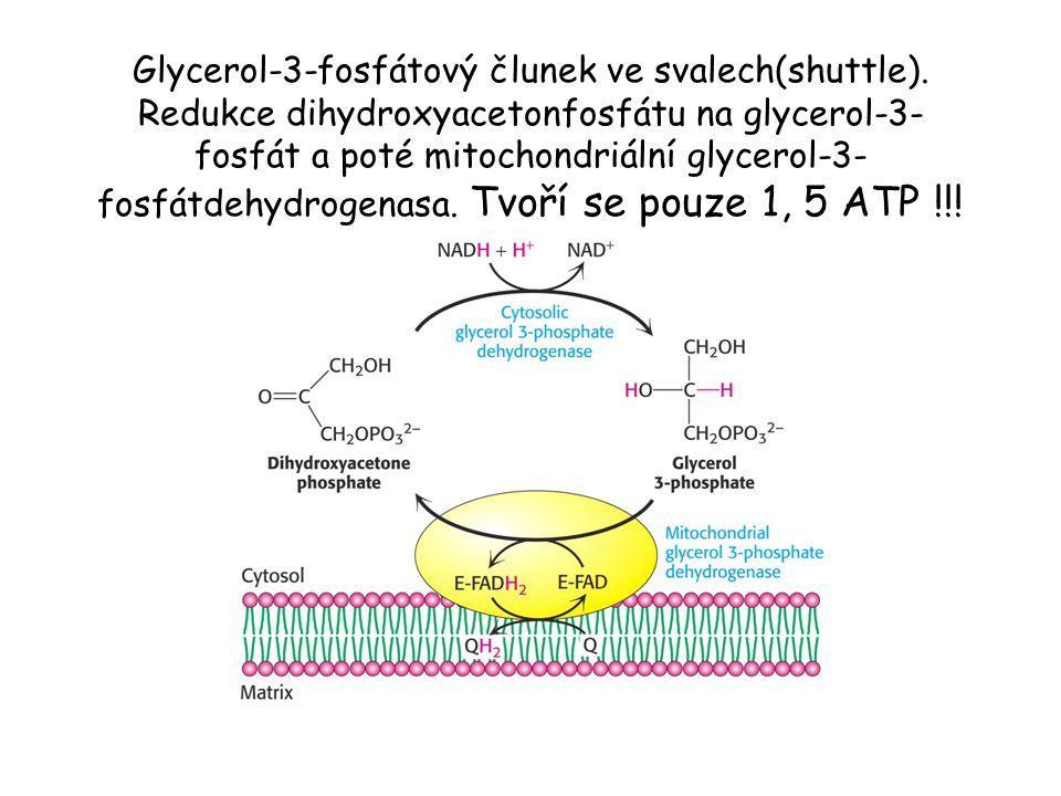 Glycerol-3-fosfátový člunek ve svalech(shuttle)