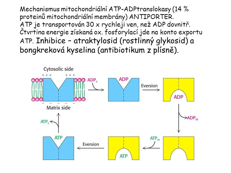 Mechanismus mitochondriální ATP-ADPtranslokasy (14 % proteinů mitochondriální membrány) ANTIPORTER.
