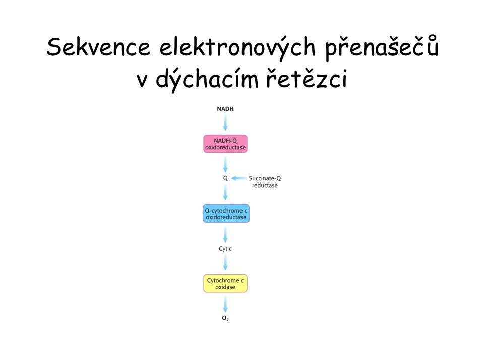 Sekvence elektronových přenašečů v dýchacím řetězci