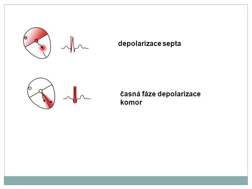 depolarizace septa časná fáze depolarizace komor
