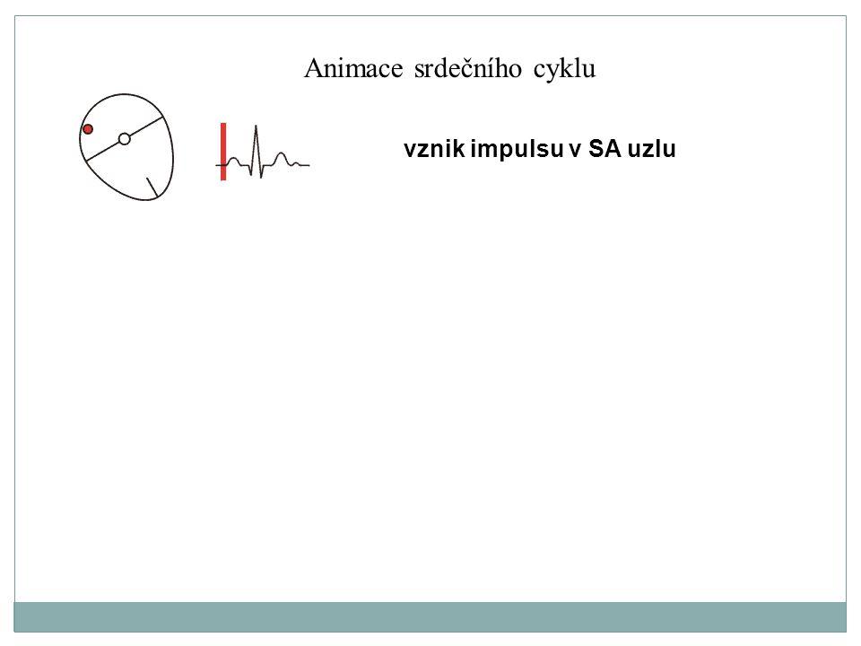 Animace srdečního cyklu
