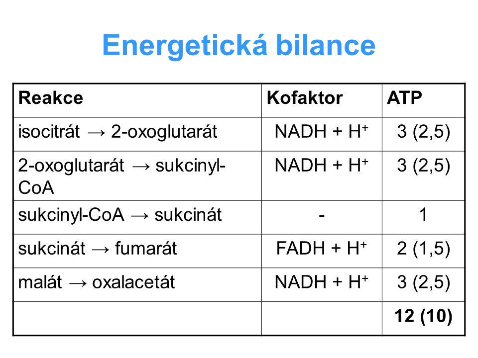 Energetická bilance Reakce Kofaktor ATP isocitrát → 2-oxoglutarát