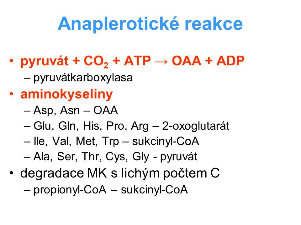 Anaplerotické reakce pyruvát + CO2 + ATP → OAA + ADP aminokyseliny