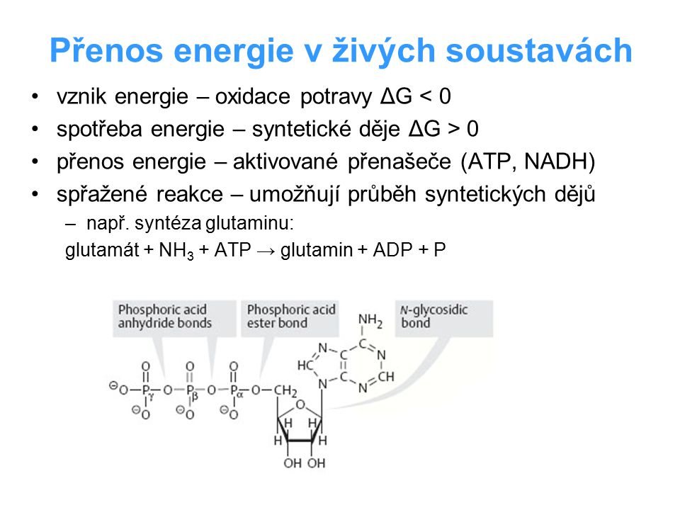 Přenos energie v živých soustavách