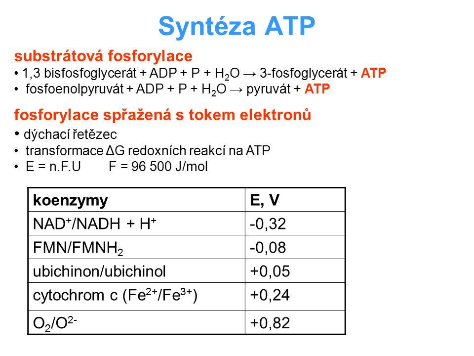 Syntéza ATP substrátová fosforylace