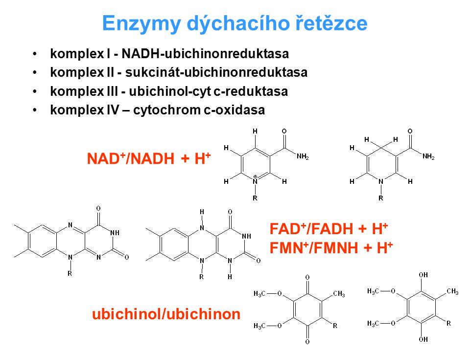 Enzymy dýchacího řetězce