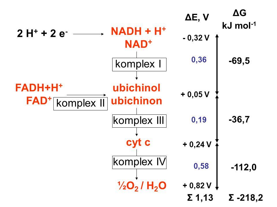 NADH + H+ NAD+ FADH+H+ FAD+ ubichinol ubichinon