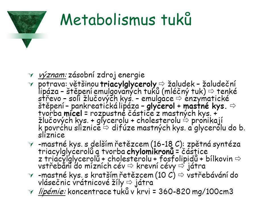 Metabolismus tuků význam: zásobní zdroj energie
