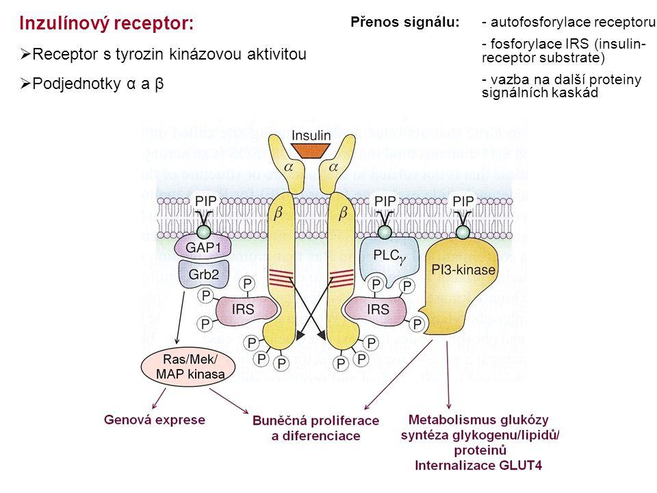 Inzulínový receptor: Receptor s tyrozin kinázovou aktivitou