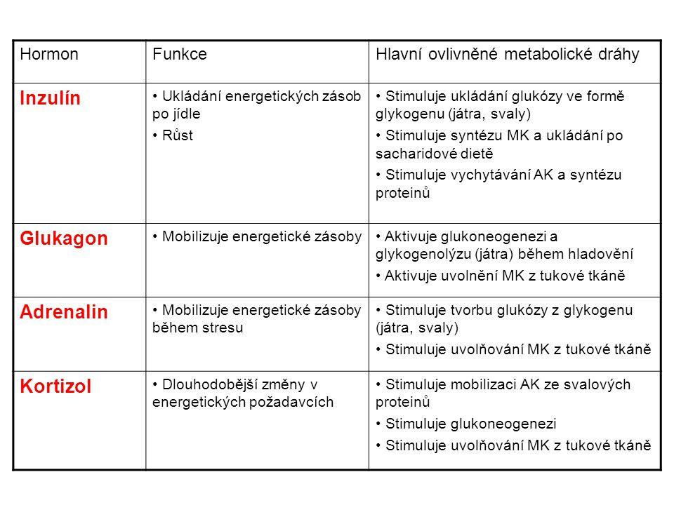 Inzulín Glukagon Adrenalin Kortizol Hormon Funkce