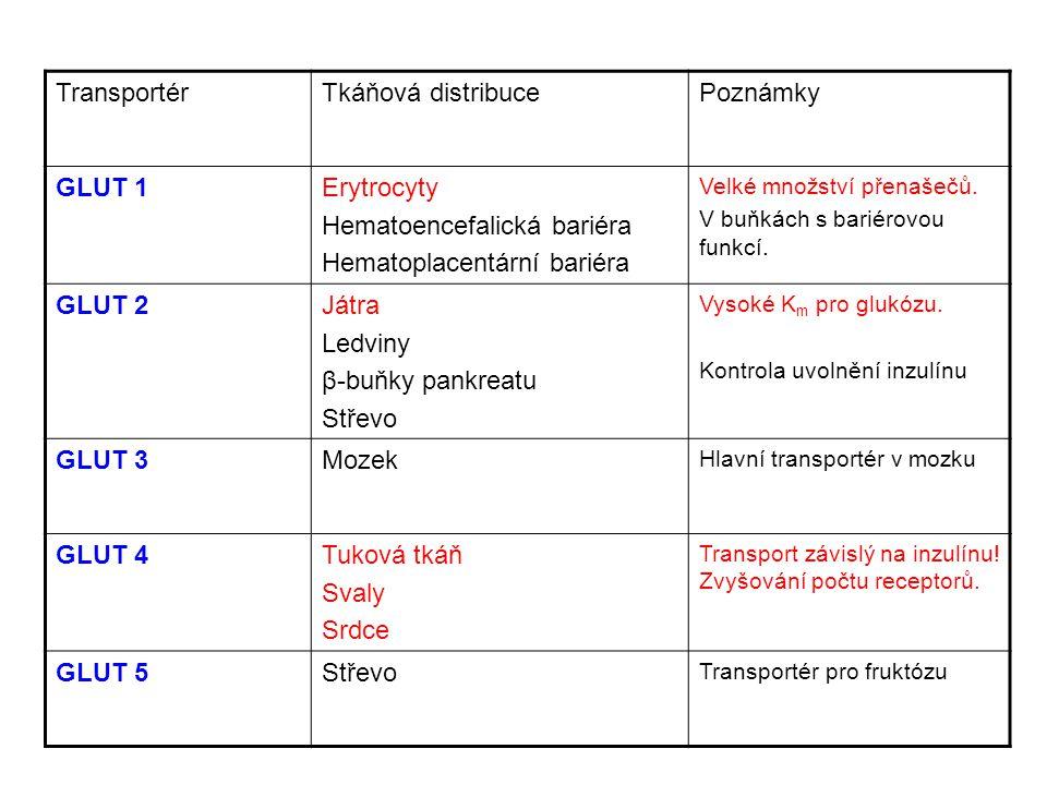 Hematoencefalická bariéra Hematoplacentární bariéra GLUT 2 Játra