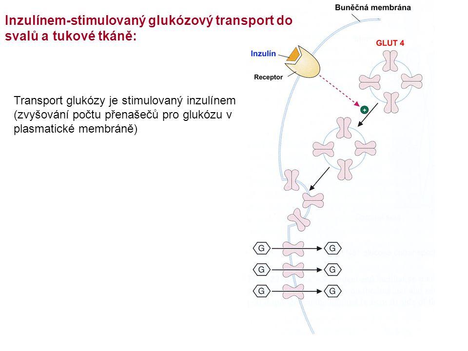 Inzulínem-stimulovaný glukózový transport do svalů a tukové tkáně: