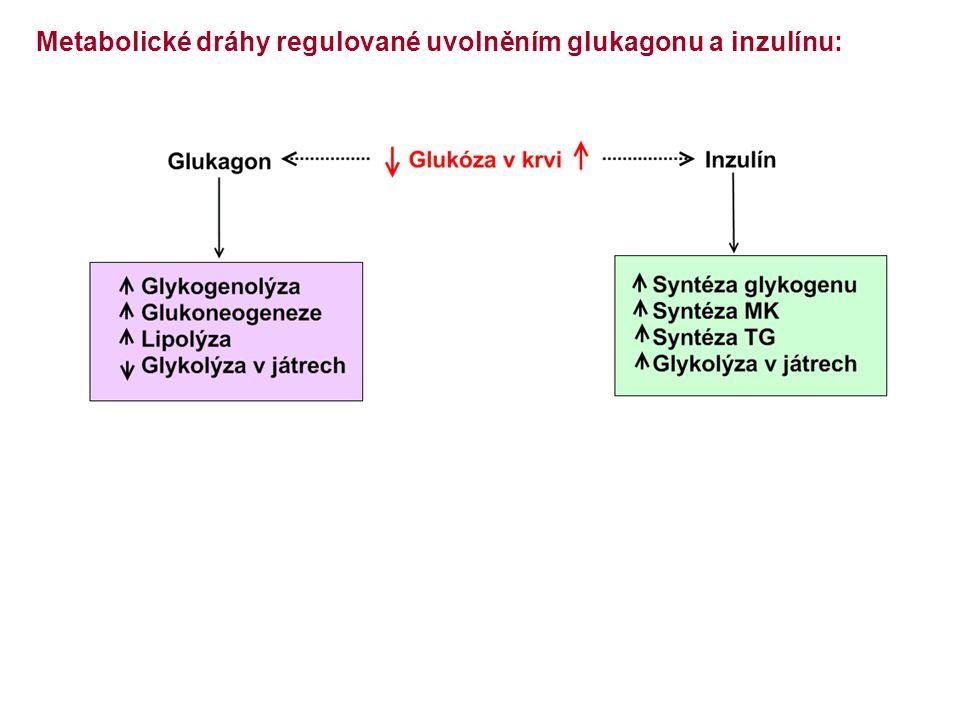 Metabolické dráhy regulované uvolněním glukagonu a inzulínu: