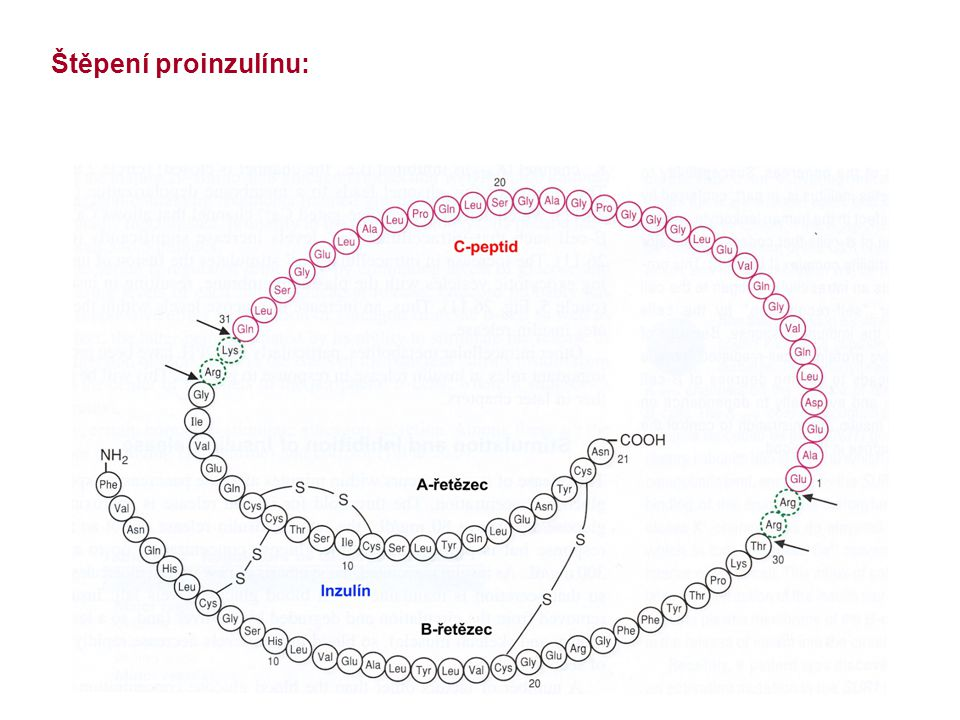Štěpení proinzulínu: