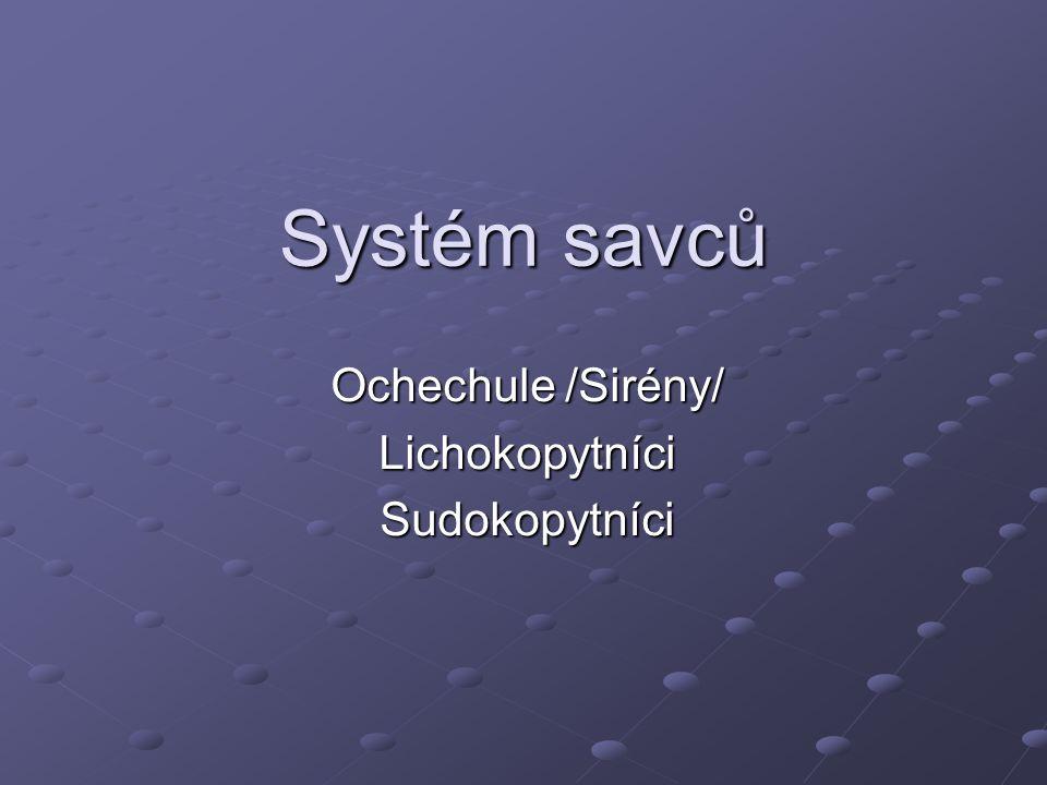 Ochechule /Sirény/ Lichokopytníci Sudokopytníci