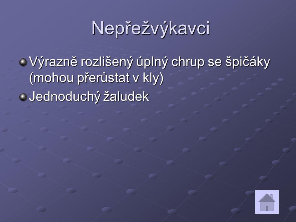 Nepřežvýkavci Výrazně rozlišený úplný chrup se špičáky (mohou přerůstat v kly) Jednoduchý žaludek