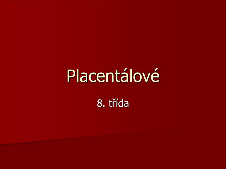 Placentálové 8. třída
