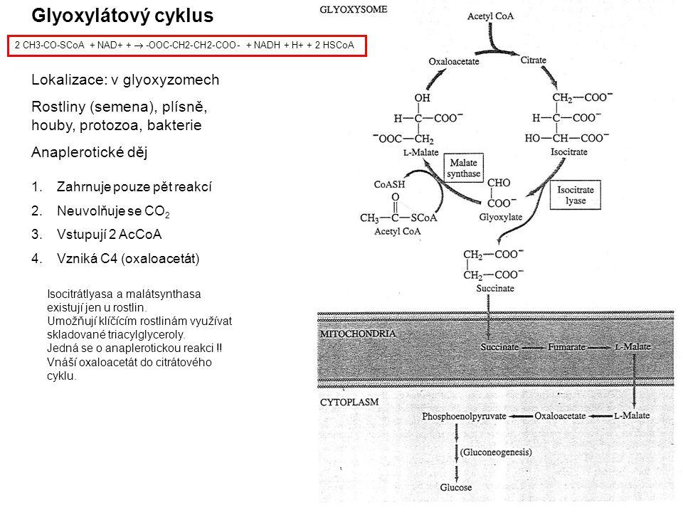 Glyoxylátový cyklus Lokalizace: v glyoxyzomech