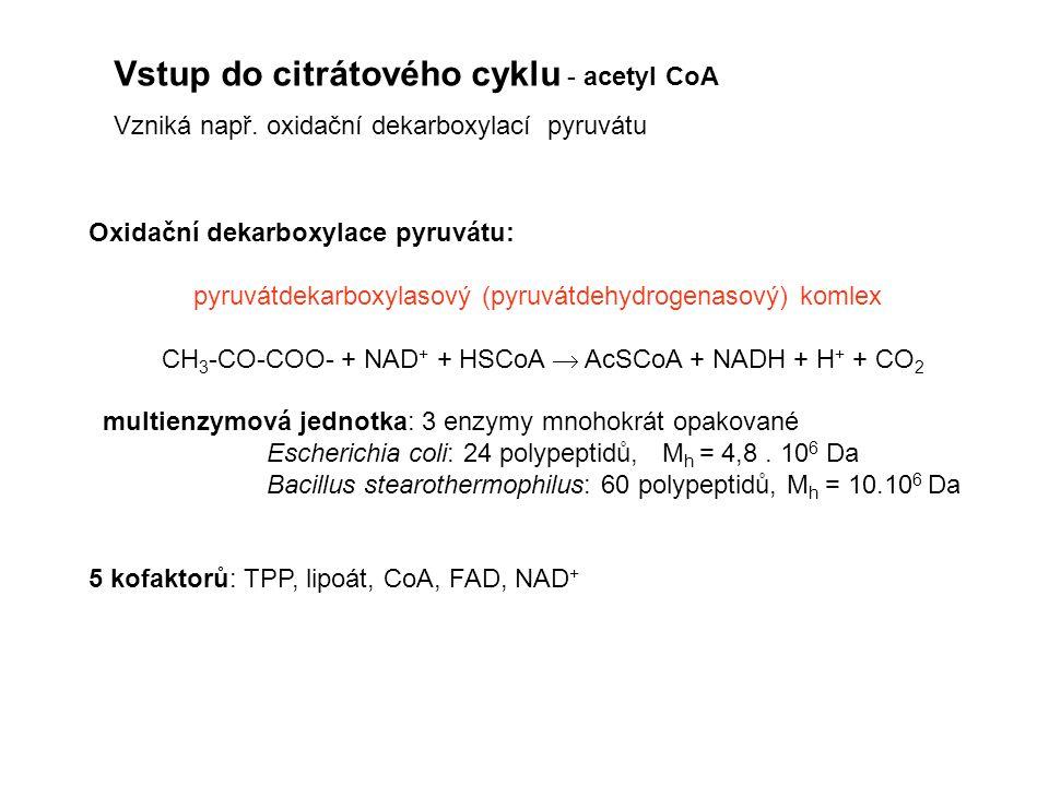 Vstup do citrátového cyklu - acetyl CoA