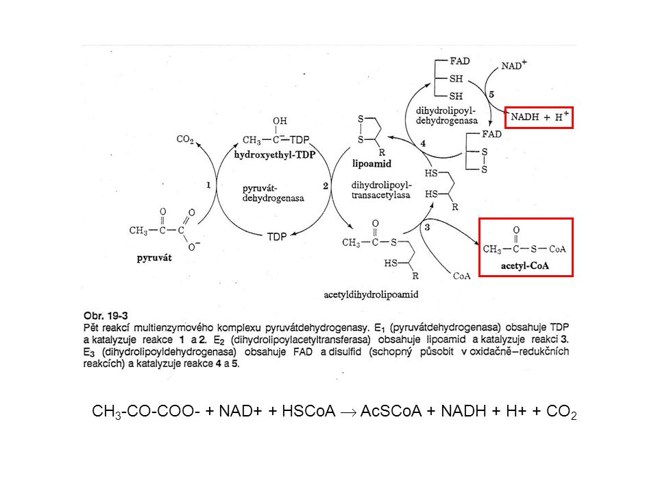 CH3-CO-COO- + NAD+ + HSCoA  AcSCoA + NADH + H+ + CO2