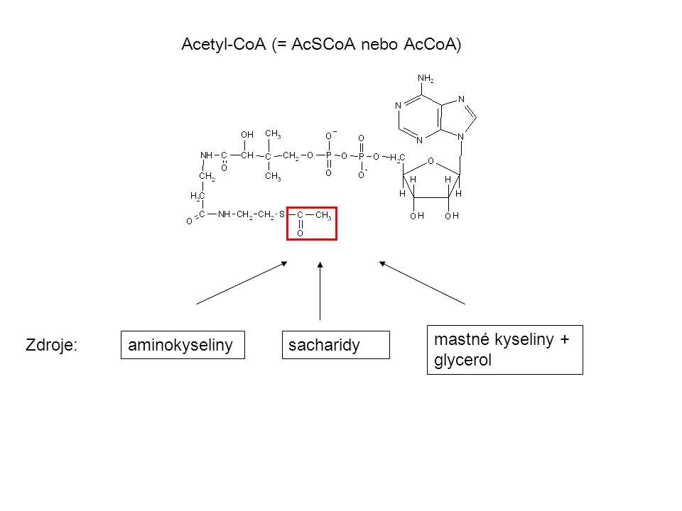 Acetyl-CoA (= AcSCoA nebo AcCoA)