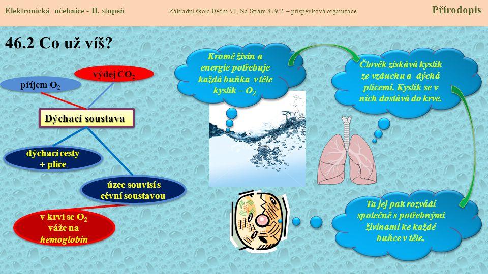 46.2 Co už víš Dýchací soustava