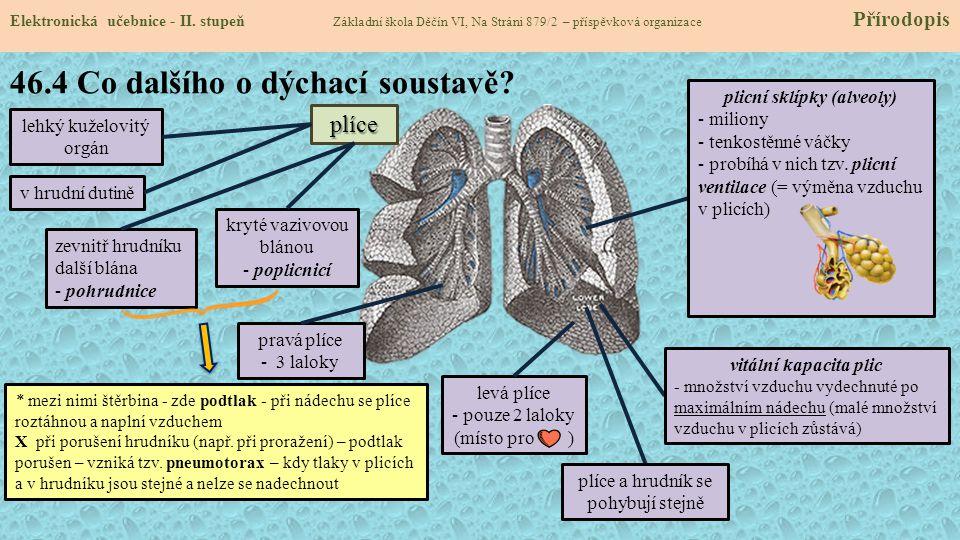 46.4 Co dalšího o dýchací soustavě
