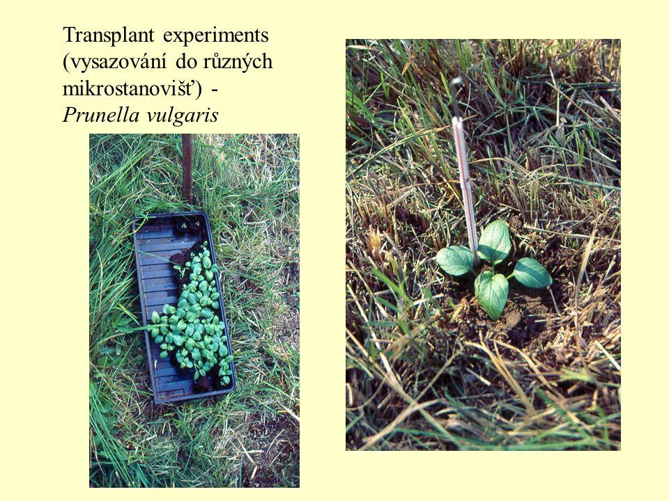 Transplant experiments (vysazování do různých mikrostanovišť) - Prunella vulgaris