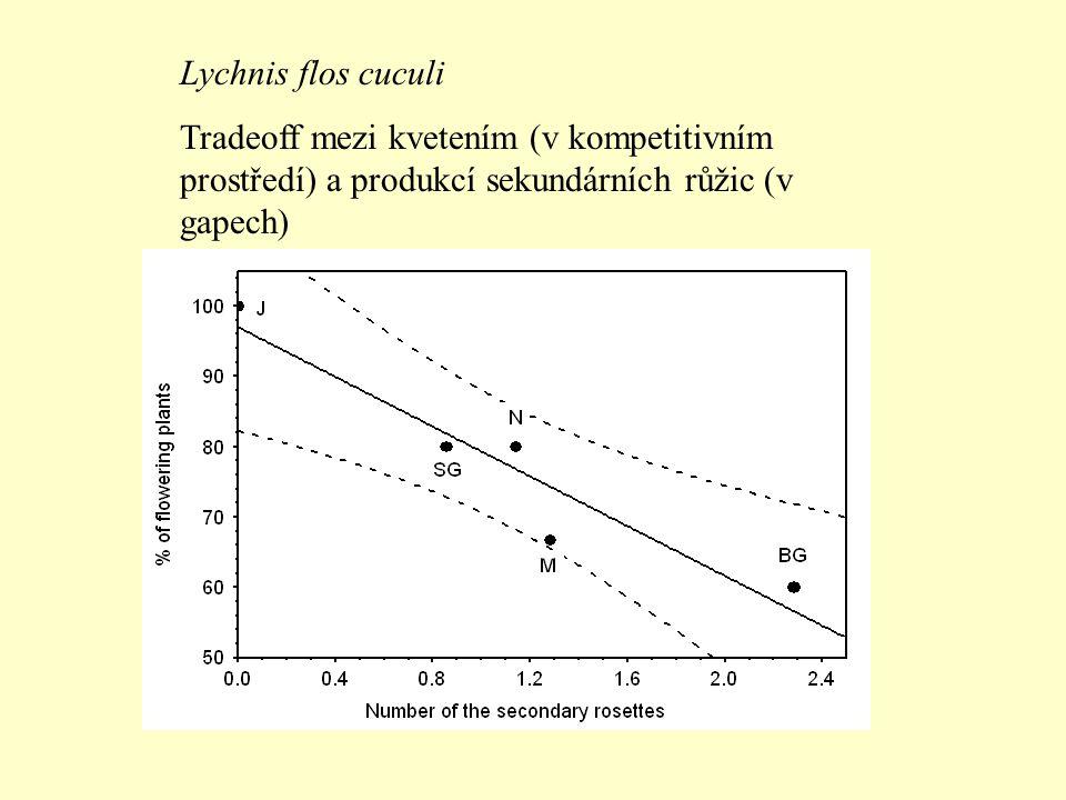 Lychnis flos cuculi Tradeoff mezi kvetením (v kompetitivním prostředí) a produkcí sekundárních růžic (v gapech)
