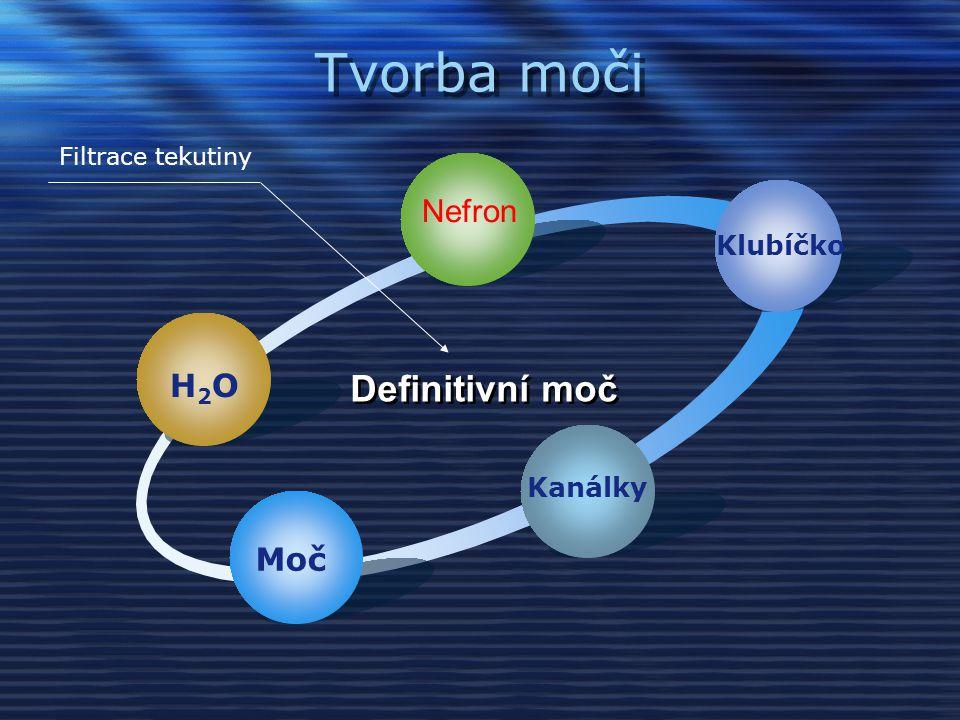 Tvorba moči Definitivní moč Nefron H2O Moč Klubíčko Kanálky