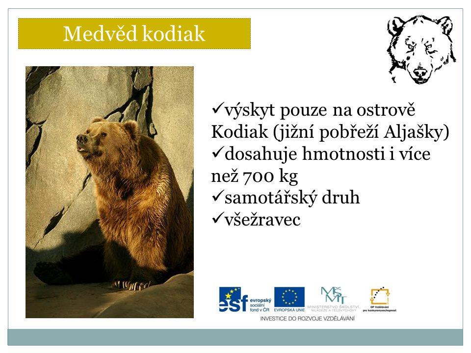 Medvěd kodiak výskyt pouze na ostrově Kodiak (jižní pobřeží Aljašky)