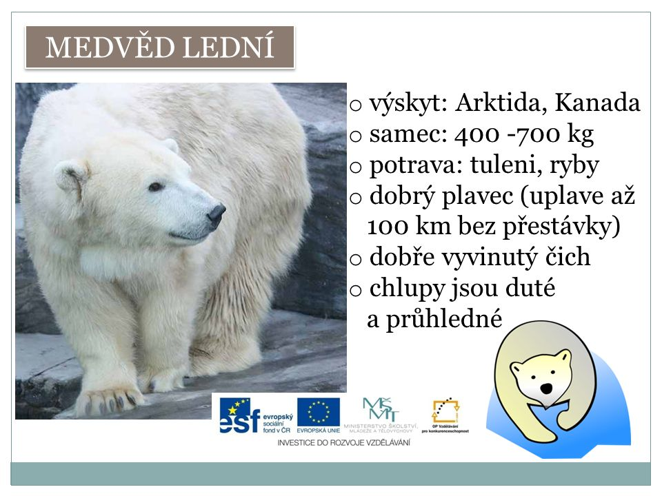 MEDVĚD LEDNÍ výskyt: Arktida, Kanada samec: 400 -700 kg