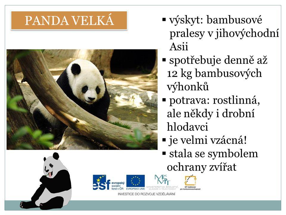 PANDA VELKÁ výskyt: bambusové pralesy v jihovýchodní Asii