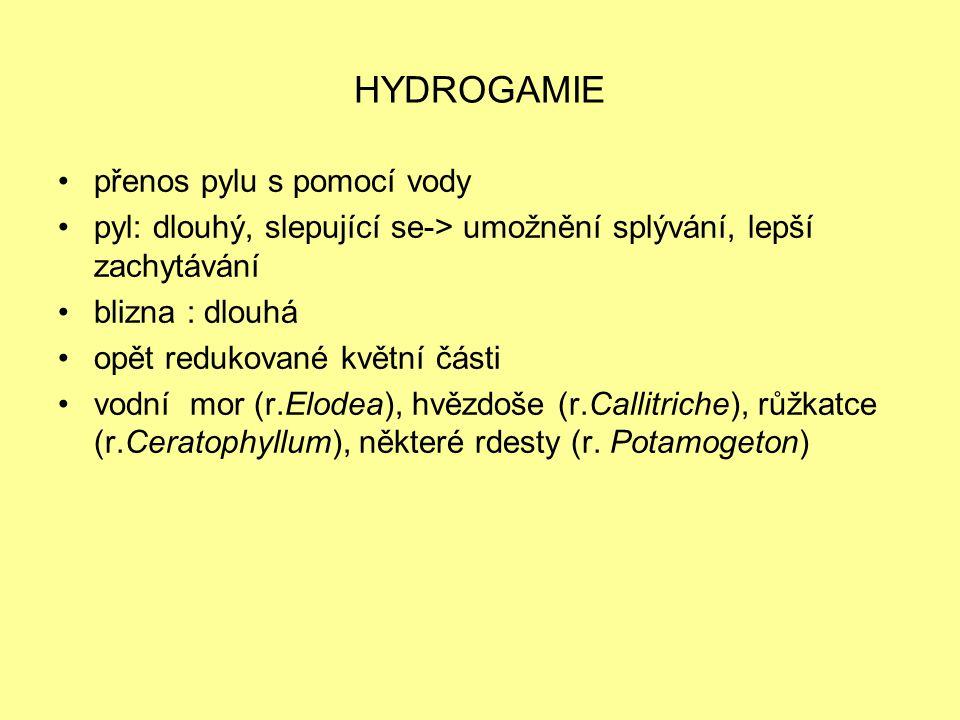 HYDROGAMIE přenos pylu s pomocí vody