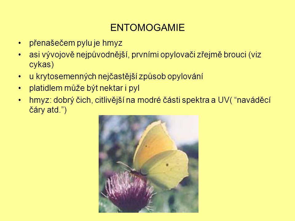 ENTOMOGAMIE přenašečem pylu je hmyz
