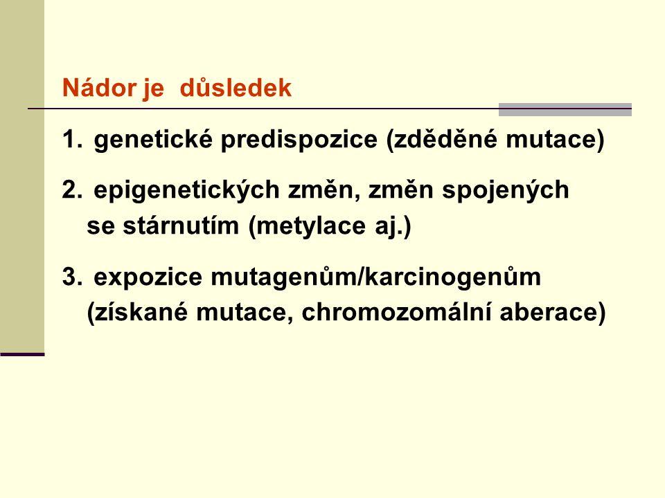 Nádor je důsledek genetické predispozice (zděděné mutace) epigenetických změn, změn spojených se stárnutím (metylace aj.)