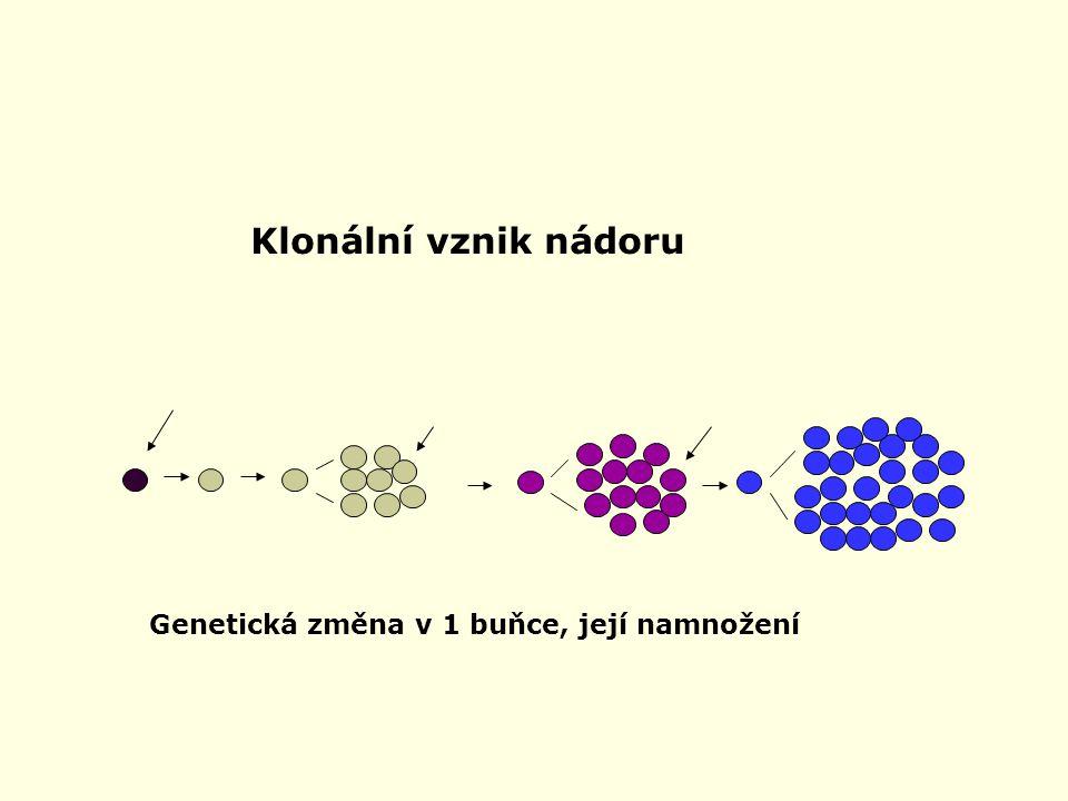Klonální vznik nádoru Genetická změna v 1 buňce, její namnožení