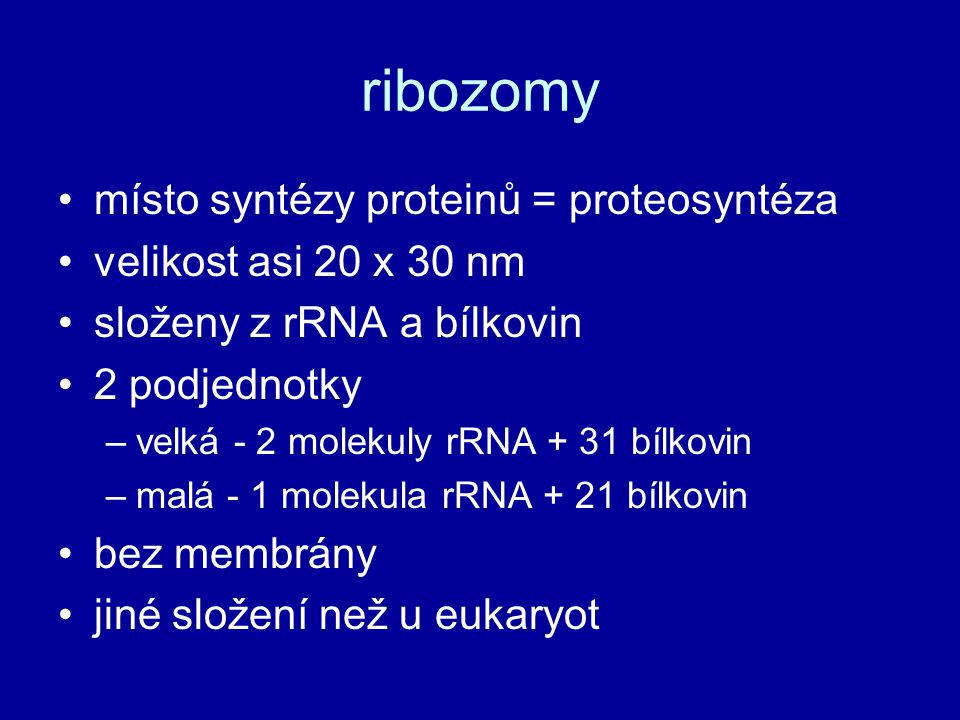 ribozomy místo syntézy proteinů = proteosyntéza