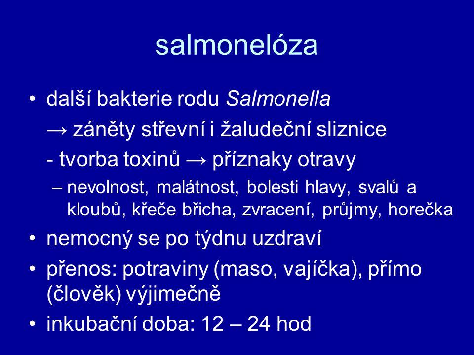 salmonelóza další bakterie rodu Salmonella
