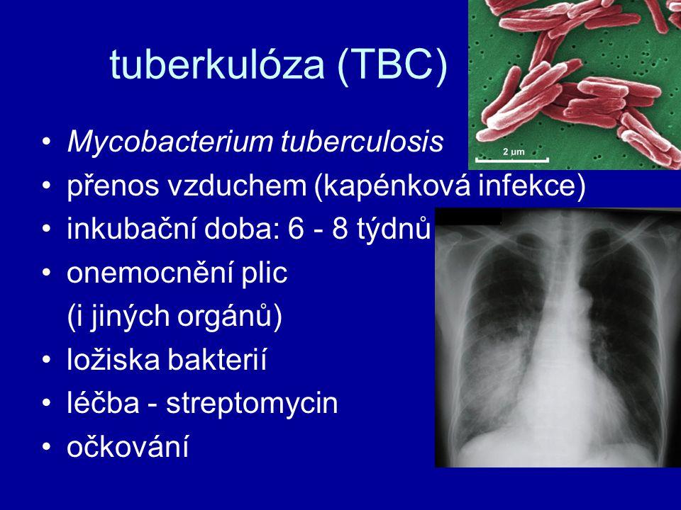 tuberkulóza (TBC) Mycobacterium tuberculosis