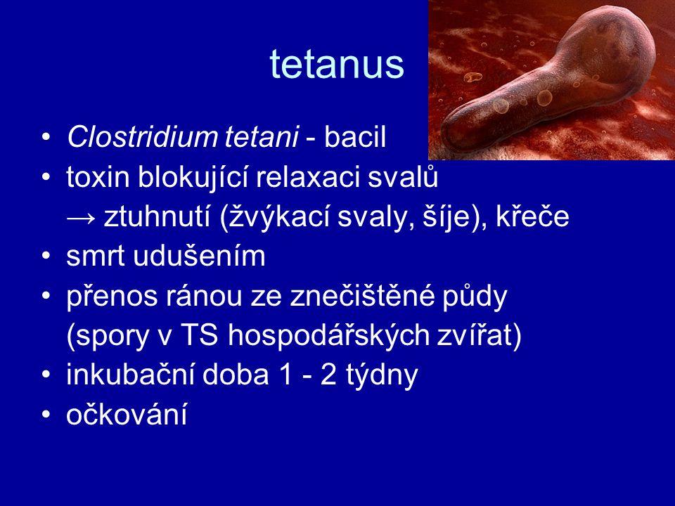 tetanus Clostridium tetani - bacil toxin blokující relaxaci svalů