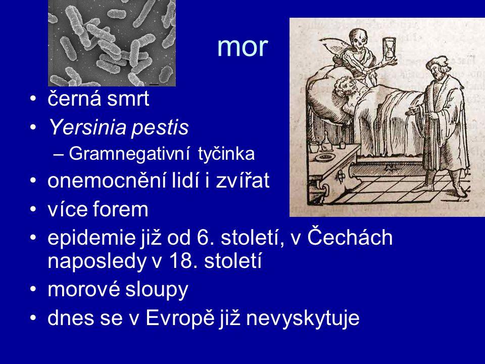 mor černá smrt Yersinia pestis onemocnění lidí i zvířat více forem