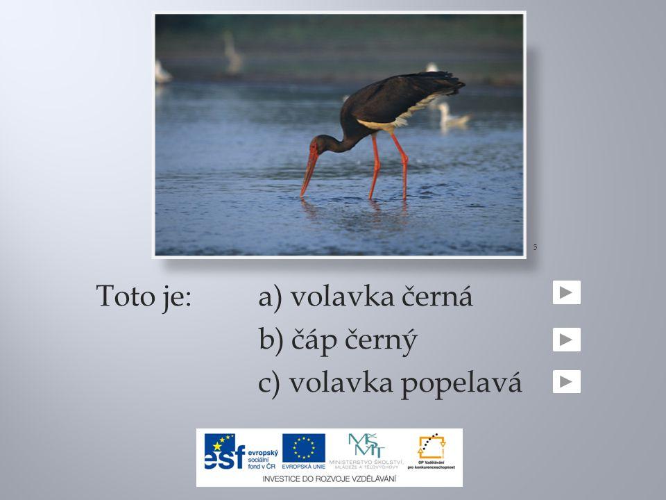 Toto je: a) volavka černá