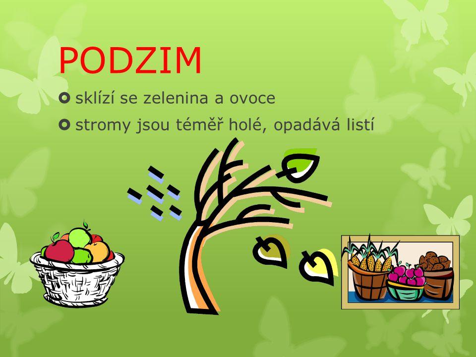 PODZIM sklízí se zelenina a ovoce