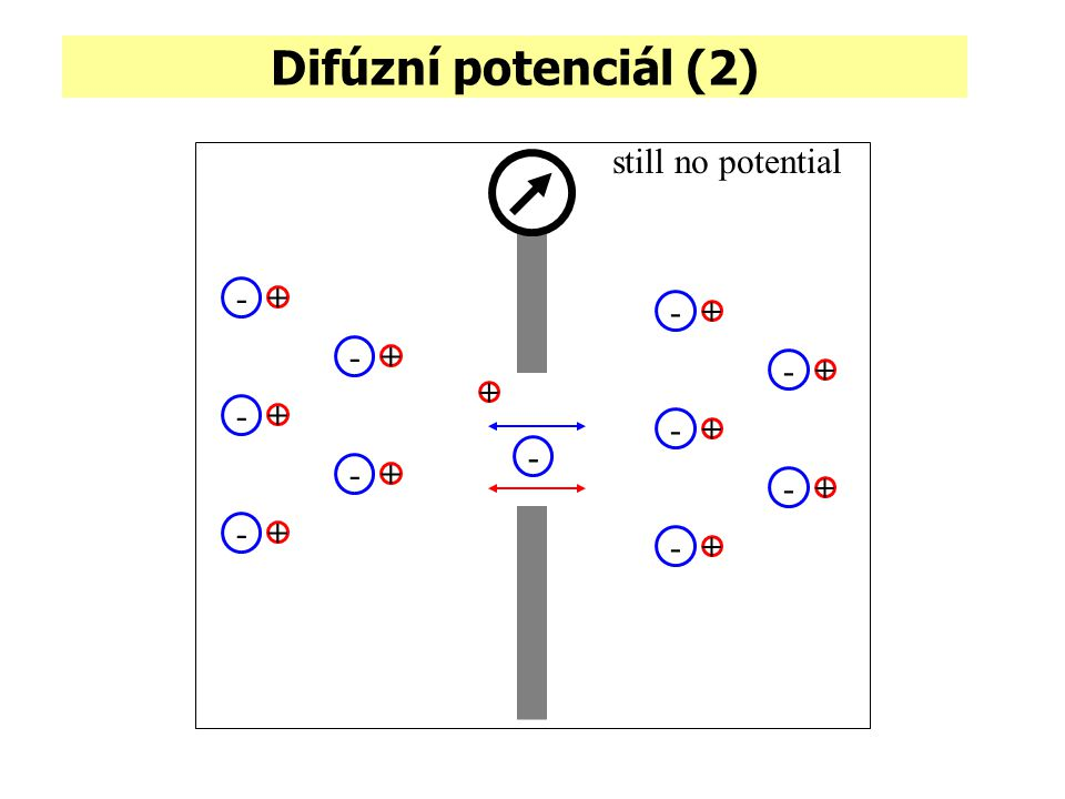 Difúzní potenciál (2) still no potential - + - + + -