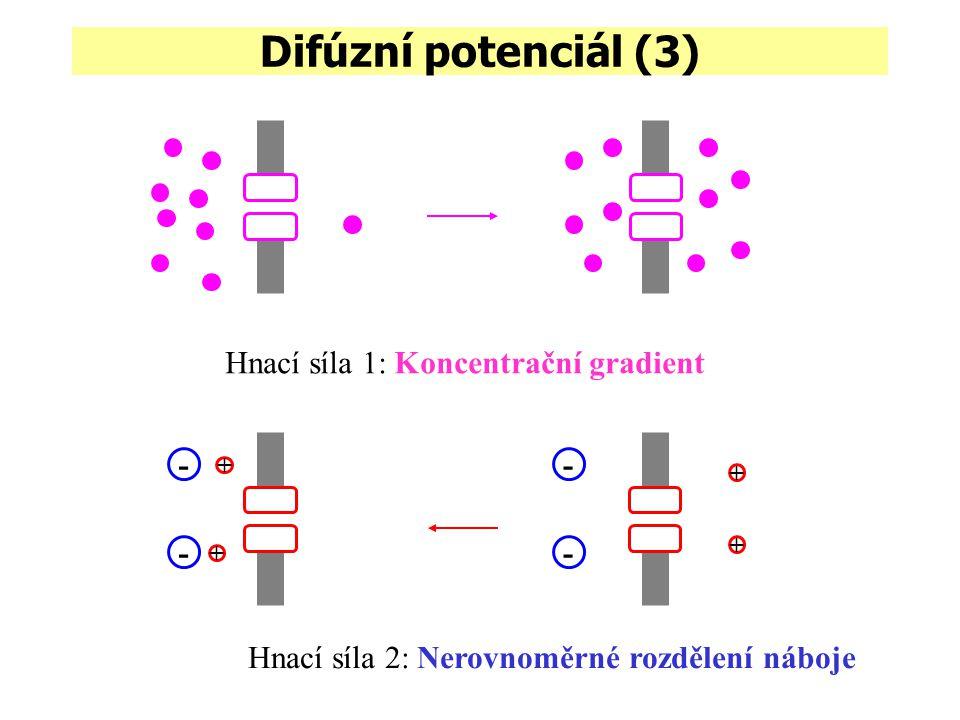 Difúzní potenciál (3) Hnací síla 1: Koncentrační gradient - - - -