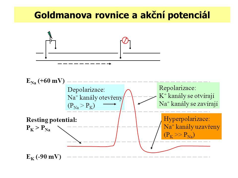 Goldmanova rovnice a akční potenciál