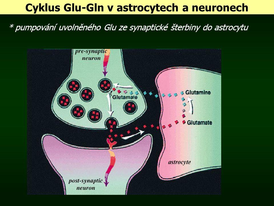 Cyklus Glu-Gln v astrocytech a neuronech