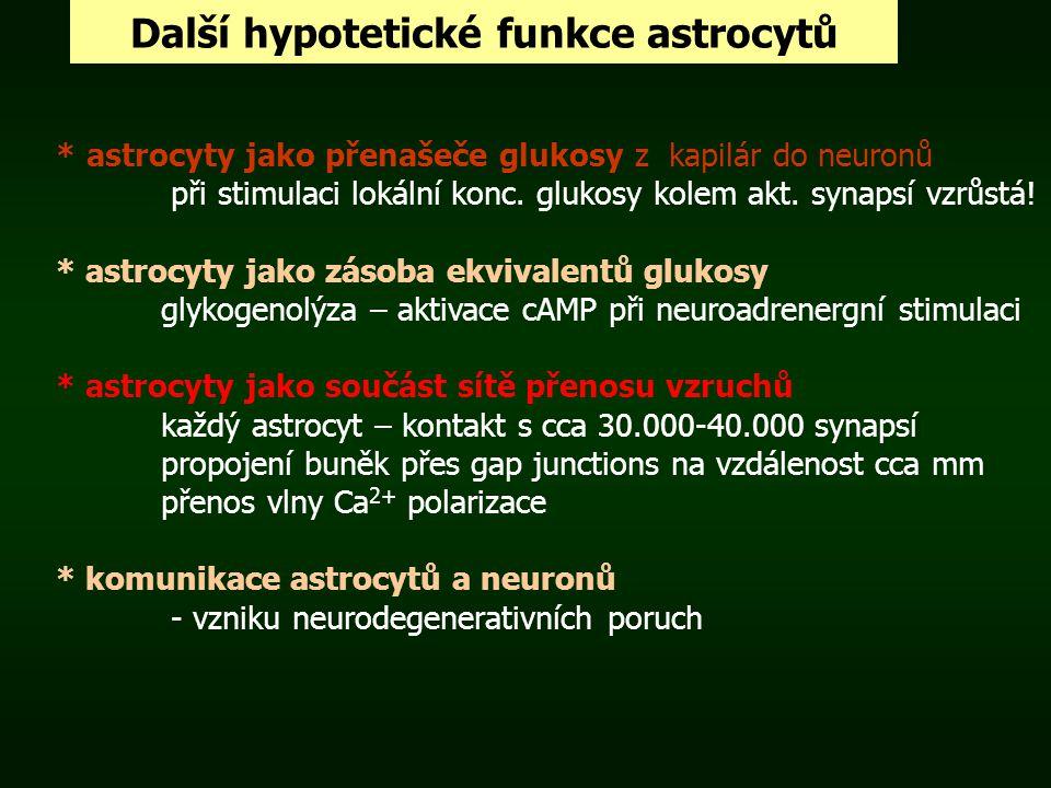 Další hypotetické funkce astrocytů